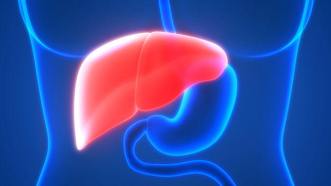 How to regenerate the liver