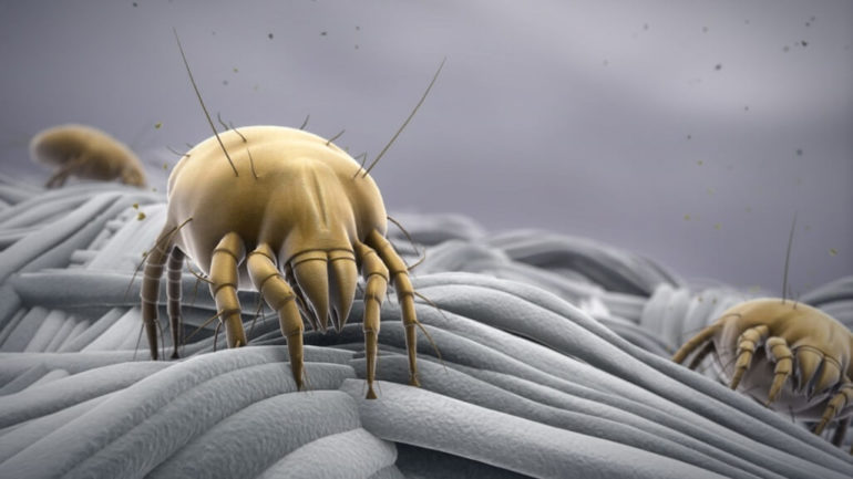 Do not let the bed bugs bite your lungs