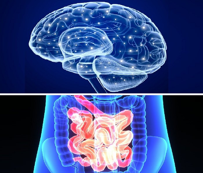 Protbiotics improve intestinal flora