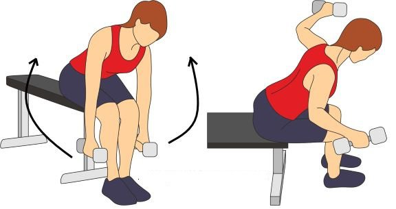 Seated Back Fly Exercise