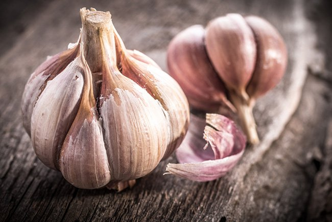 garlic cure